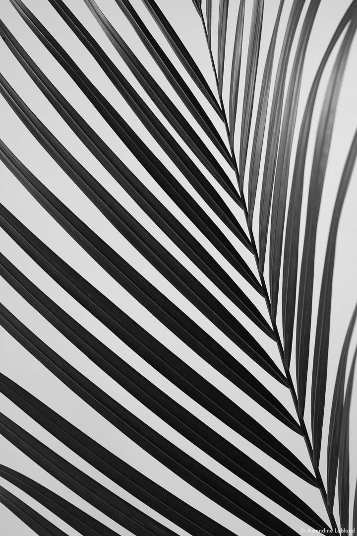 Abstrait Still life